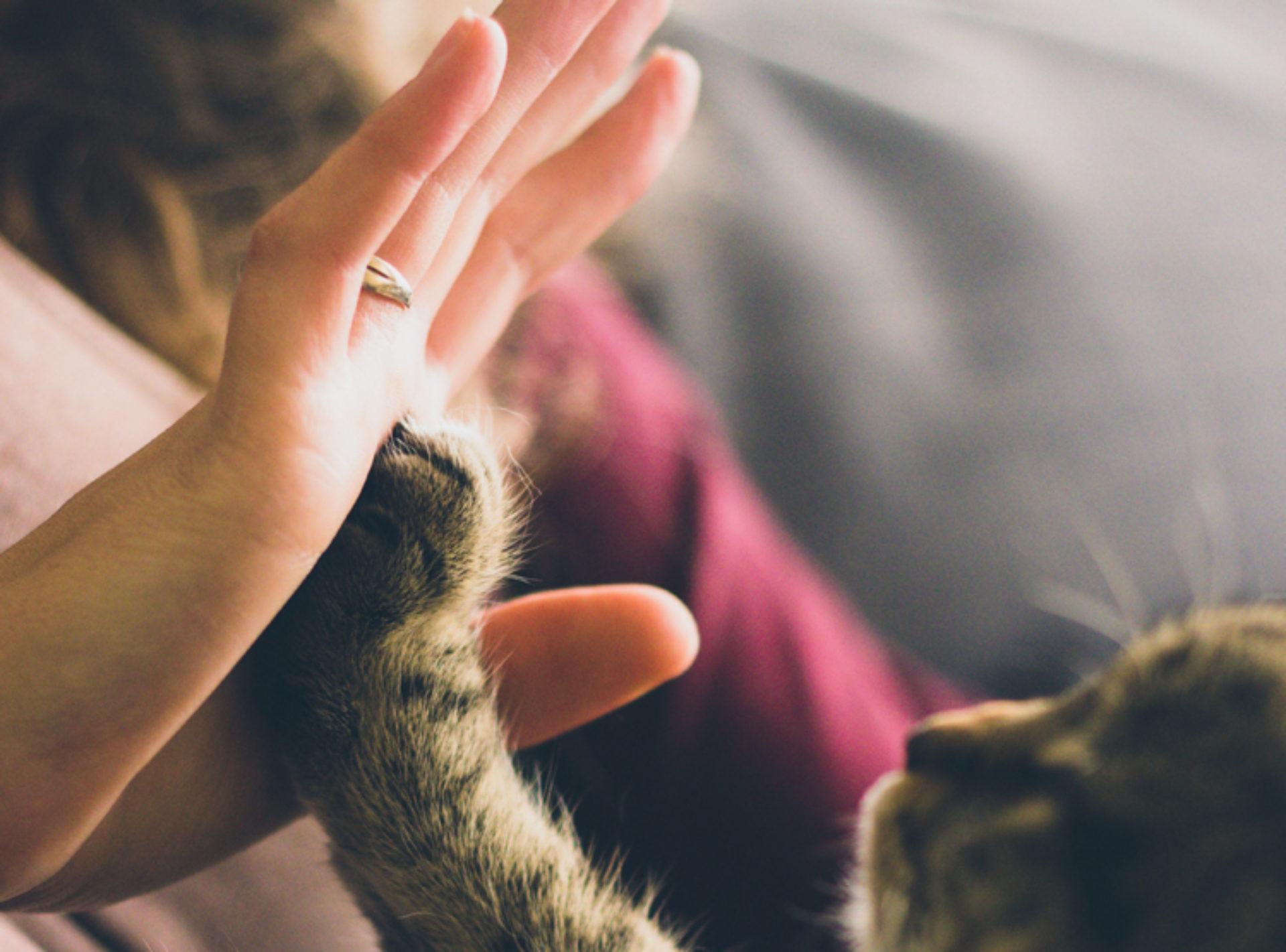 Column Belinda Inhulsen: dierenliefde