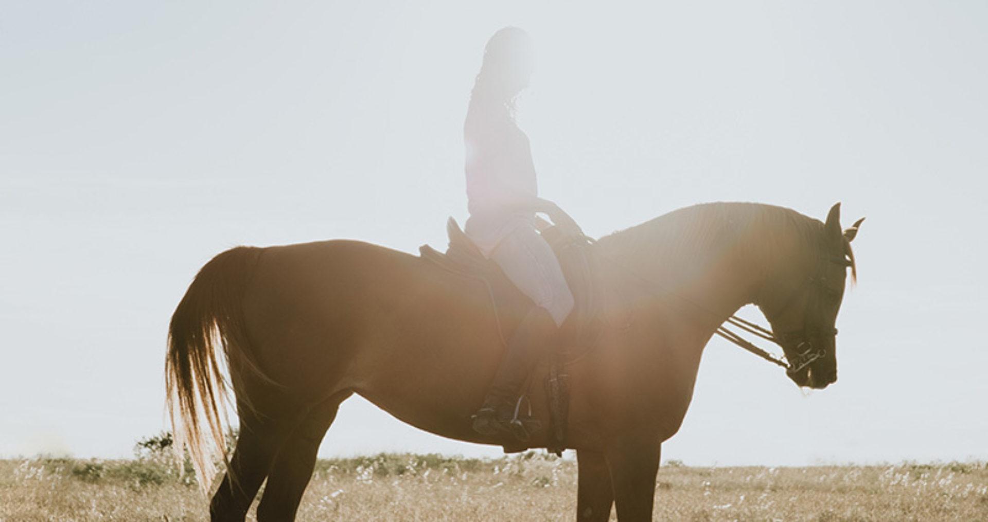 De geheimen van een paardenfluisteraar