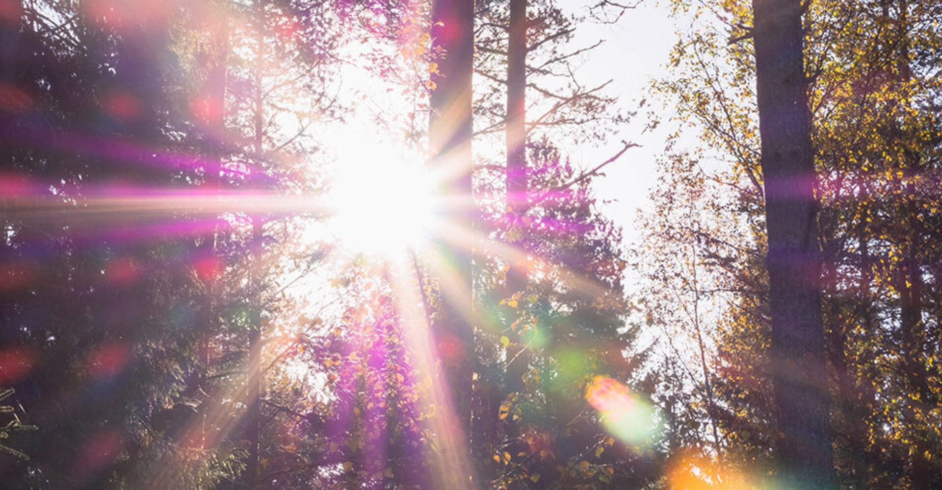 Imbolc (2 februari): de zonnekracht neemt toe, de lente ontplooit zich stilaan