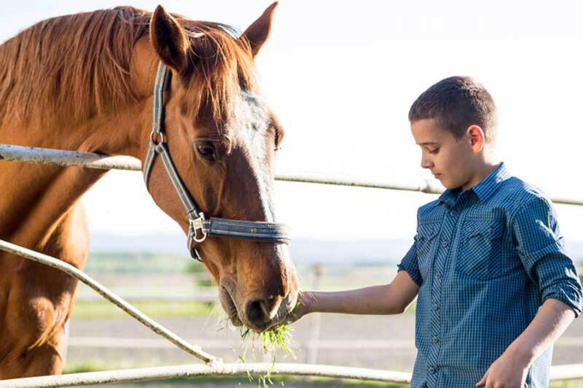 De magie van paardencoaching